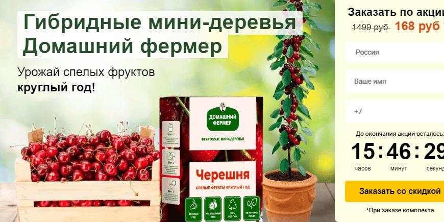 Гибридные мини-деревья — Fruit Tree за 168р. — Обман!