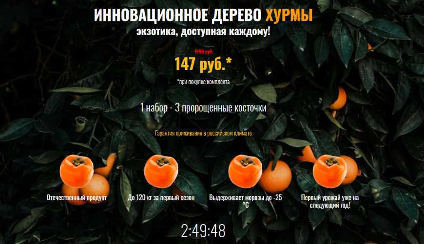 Инновационное дерево хурмы за 147р. — Обман!